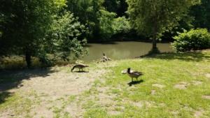 Nachwuchs bei den Wasservögeln