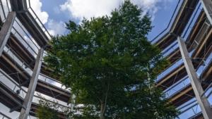 Blick auf einen Baum zwischen der Aussichtsplattform
